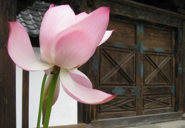 門前 蓮華